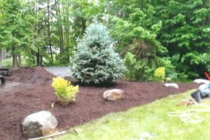 Landscaping & Design Photo